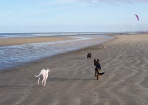 DYNA à la plage (7 décembre 2008) Dy-pla11