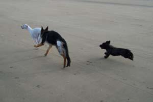 DYNA à la plage (7 décembre 2008) Dy-pla14