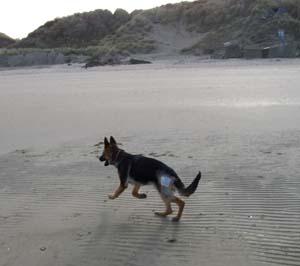 DYNA à la plage (7 décembre 2008) Dy-pla15