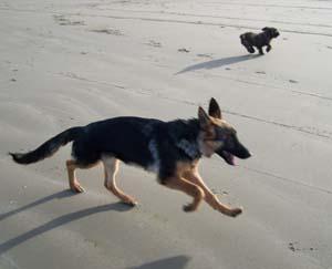 DYNA à la plage (7 décembre 2008) Dy-pla16