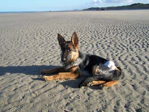 DYNA à la plage (7 décembre 2008) Dy-pla18