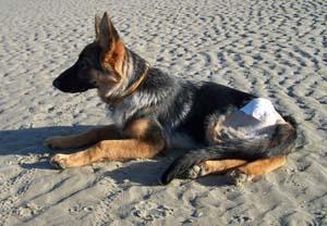 DYNA à la plage (7 décembre 2008) Dy-pla19