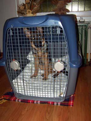 DYNA de retour à la maison (4 décembre 2008) Dyna-e10