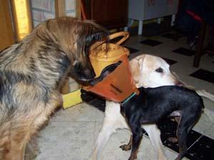 Retour à la maison (4 novembre 2008) Mi-ave12