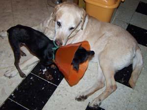 Retour à la maison (4 novembre 2008) Mi-ave13