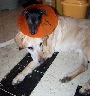 Retour à la maison (4 novembre 2008) Mi-ave17