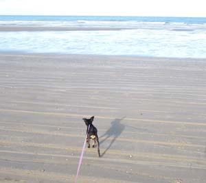 MINUS à la plage (7 décembre 2008) Mi-pla11