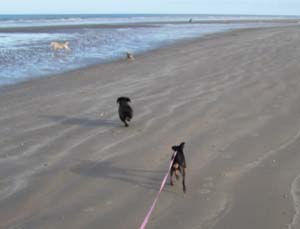 MINUS à la plage (7 décembre 2008) Mi-pla12