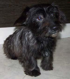 PLUCKY a vu le vétérinaire (25 novembre 2008) Plu-as10