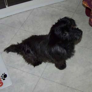 PLUCKY a vu le vétérinaire (25 novembre 2008) Plu-as11