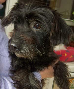 PLUCKY a vu le vétérinaire (25 novembre 2008) Plu-br10