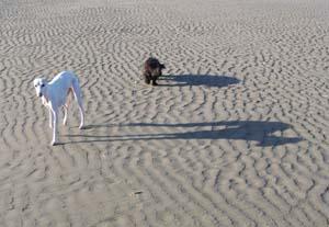 PLUCKY à la plage (7 décembre 2008) Plu-pl11
