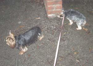 Promenade du soir (16 décembre 2008) Promen12