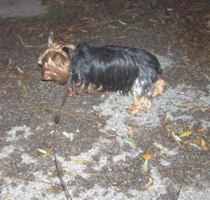 Promenade du soir (16 décembre 2008) Promen14