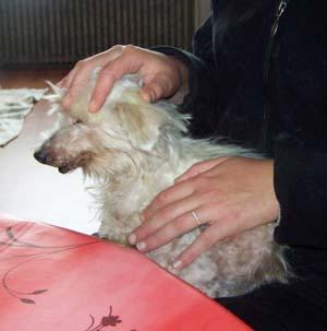 TCHARA est adoptée (9 novembre 2008) Tc-dor11