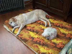 TCHARA est adoptée (9 novembre 2008) Tc-jul10