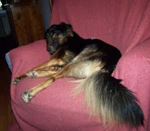TYSON et son fauteuil (22 décembre 2008) Ty-fau13