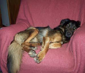 TYSON et son fauteuil (22 décembre 2008) Ty-fau14