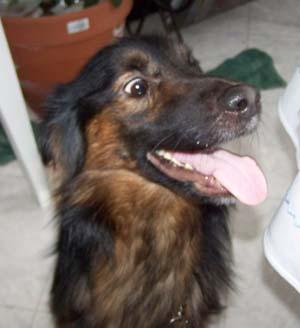 TYPHON est à la maison (9 décembre 2008) Ty-tet10
