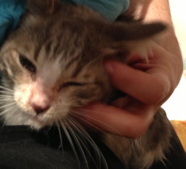 Fa ou adoptants pour 3 magnifiques chatons avant le 17 août RP  Femell11