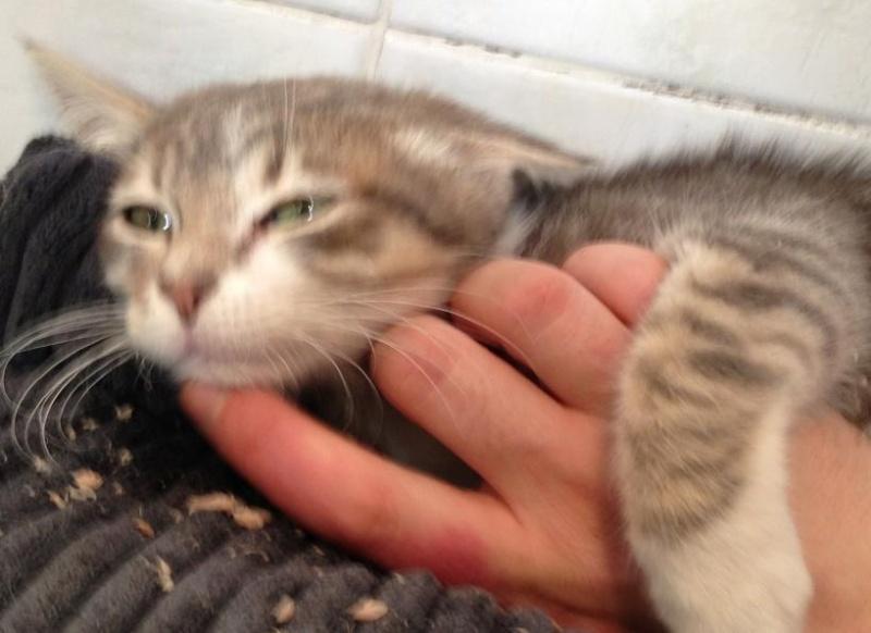 Fa ou adoptants pour 3 magnifiques chatons avant le 17 août RP  Jackso12