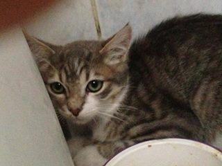 Fa ou adoptants pour 3 magnifiques chatons avant le 17 août RP  Jackso14