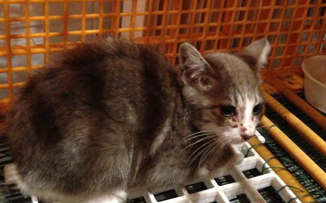 Fa ou adoptants pour 3 magnifiques chatons avant le 17 août RP  Male_p12