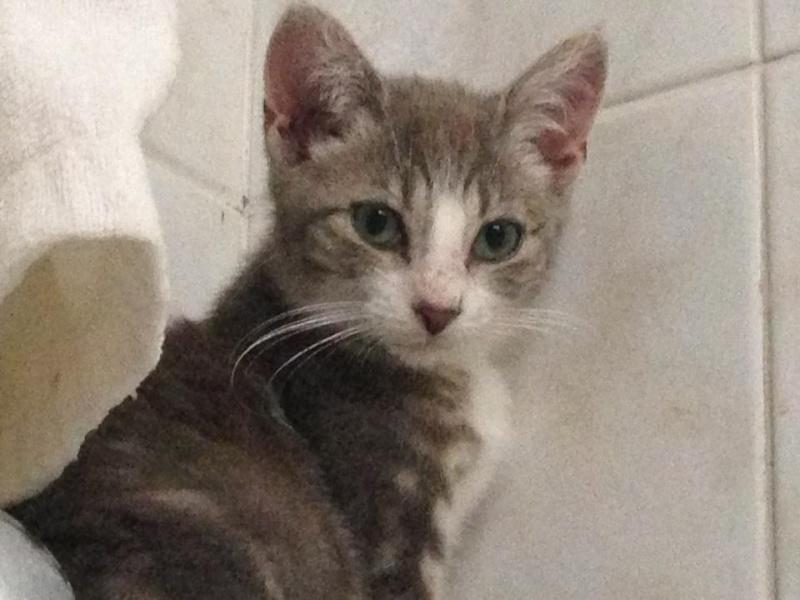 Fa ou adoptants pour 3 magnifiques chatons avant le 17 août RP  Marley14