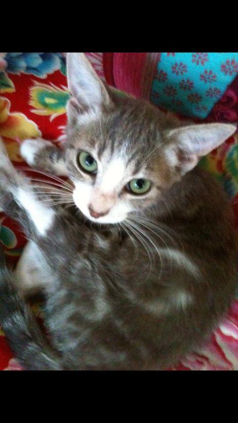 Fa ou adoptants pour 3 magnifiques chatons avant le 17 août RP  Marley17