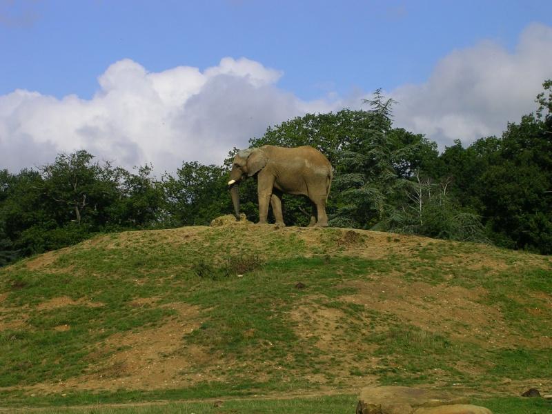 Zoo de thoiry Dscn1510
