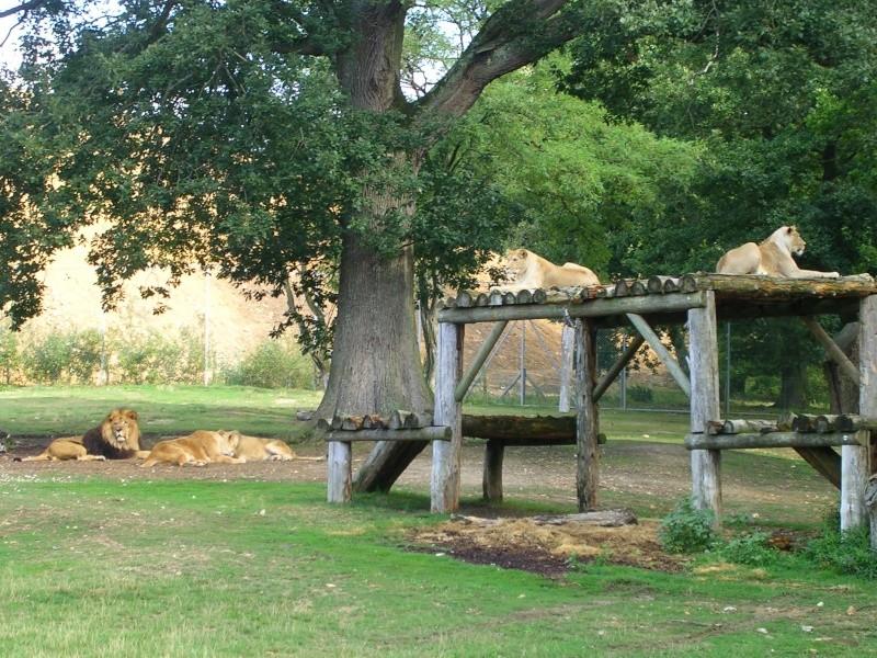 Zoo de thoiry Dscn1511