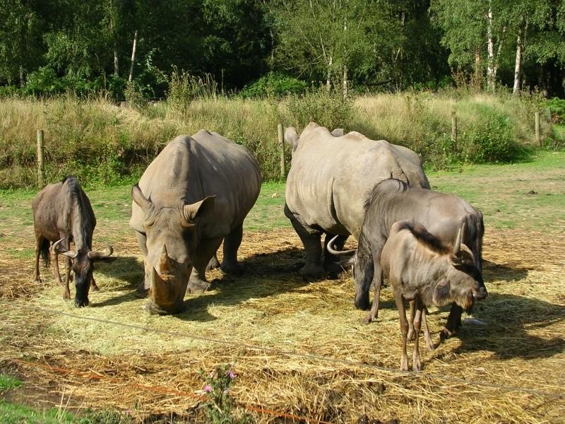Zoo de thoiry Dscn1512