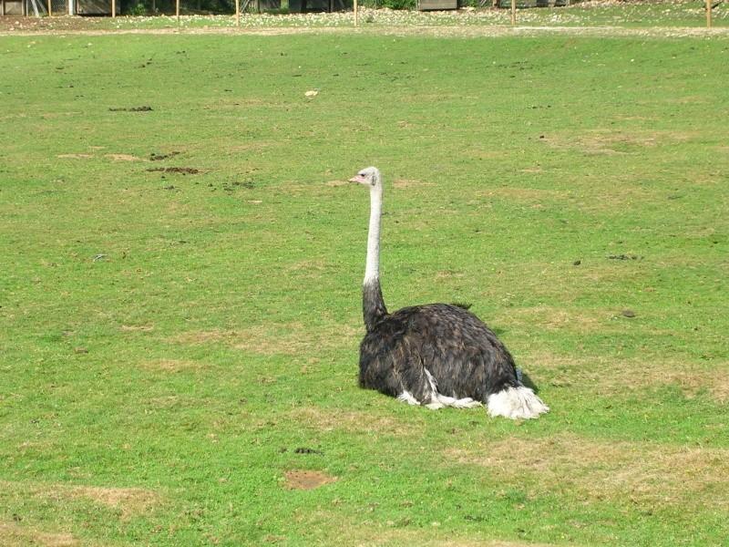 Zoo de thoiry Dscn1513
