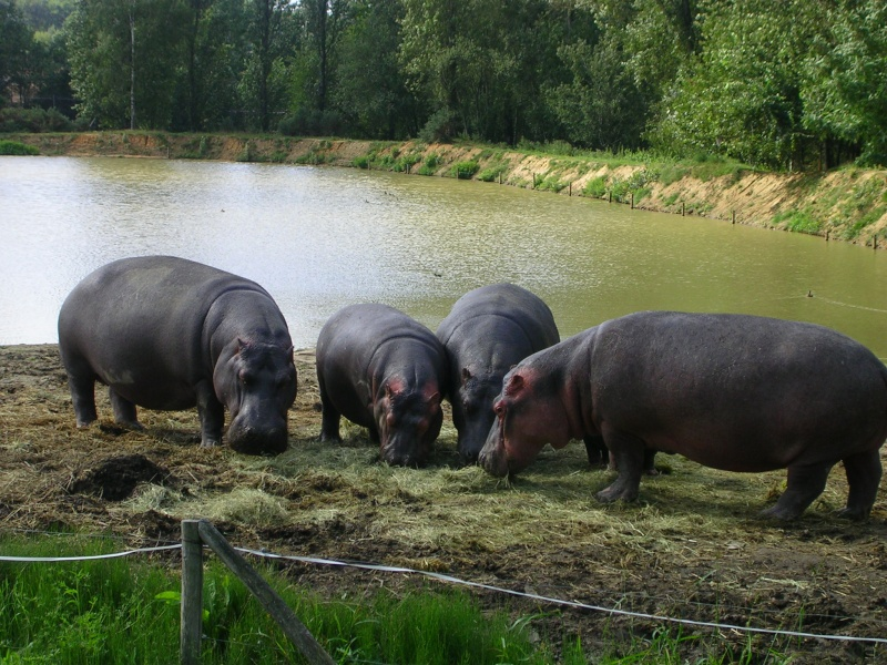 Zoo de thoiry Dscn1514