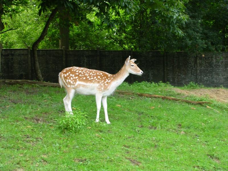 Zoo de thoiry Dscn1515