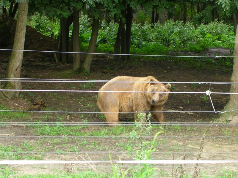 Zoo de thoiry Dscn1516