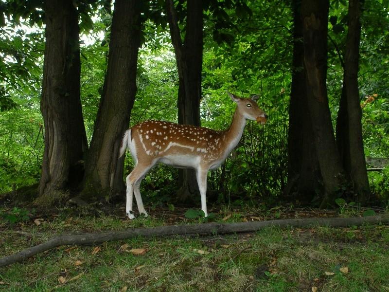 Zoo de thoiry Dscn1517