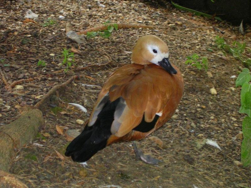 Zoo de thoiry Dscn1518
