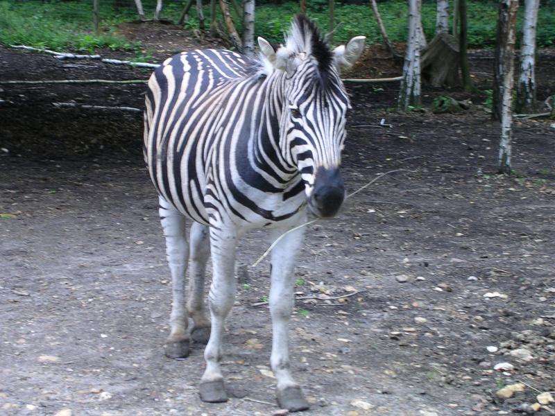 Zoo de thoiry Dscn1610