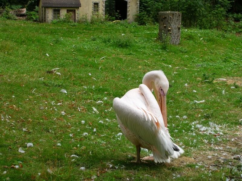 Zoo de thoiry Dscn1611