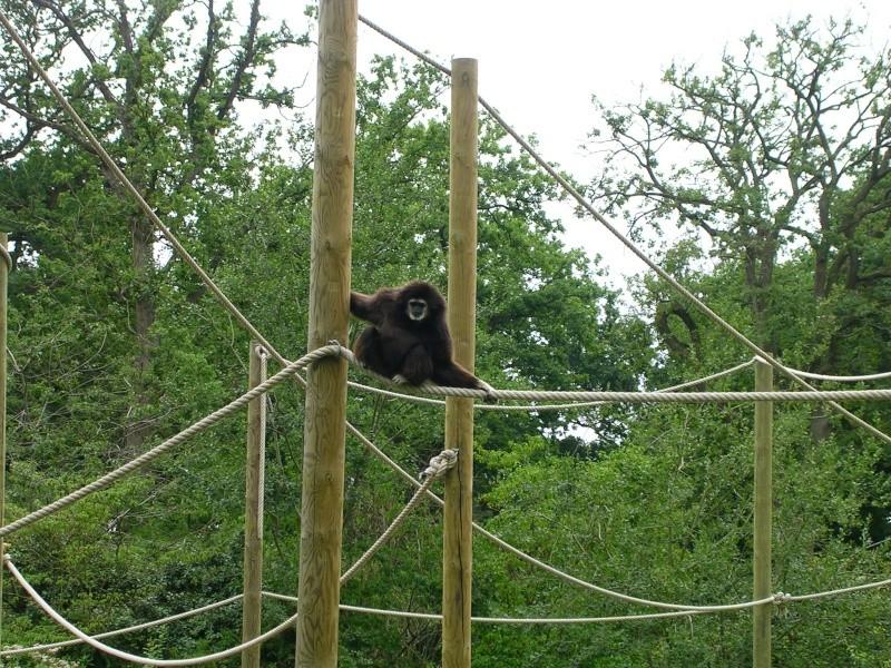 Zoo de thoiry Dscn1612