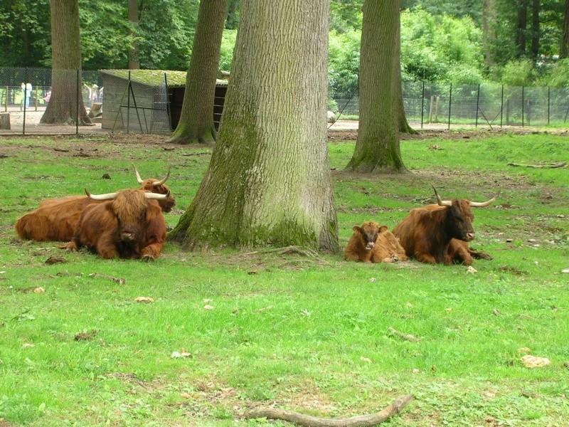 Zoo de thoiry Dscn1613