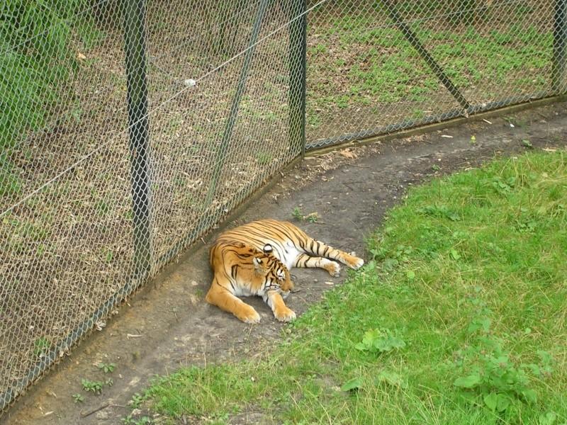 Zoo de thoiry Dscn1616