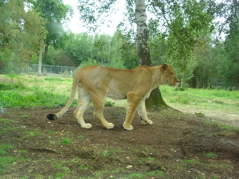 Zoo de thoiry Dscn1618