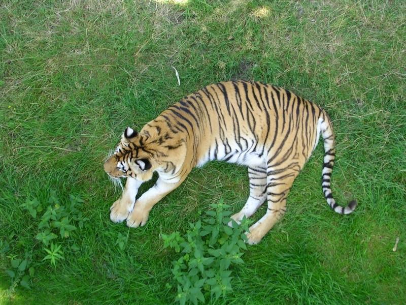 Zoo de thoiry Dscn1619