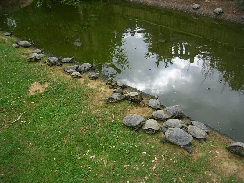 Zoo de thoiry Dscn1621