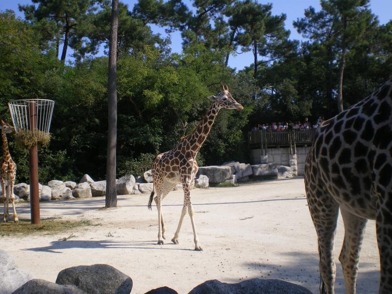 Zoo de la Palmyre Imgp0411
