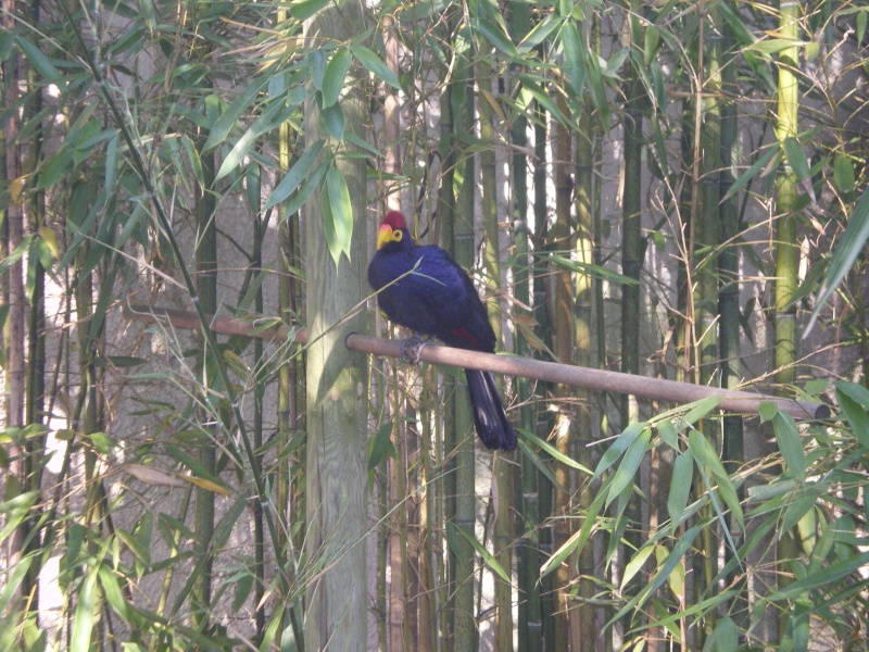 Zoo de la Palmyre Imgp0414