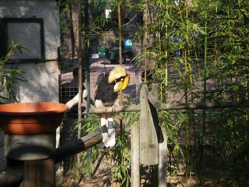 Zoo de la Palmyre Imgp0415