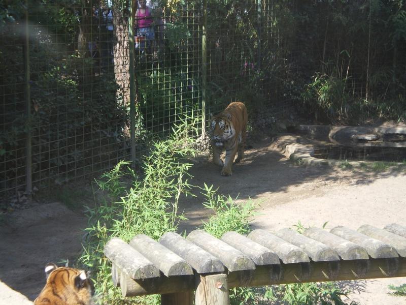 Zoo de la Palmyre Imgp0511
